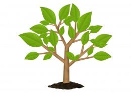 green-tree-environment-symbol-psd-banerplus.ir_